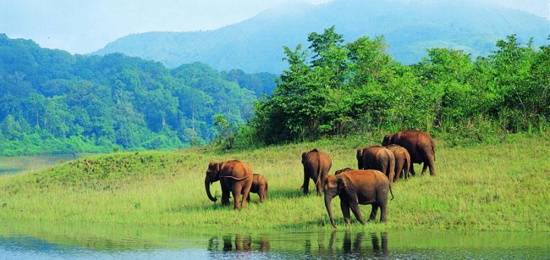 wildlife-tour-in-odisha
