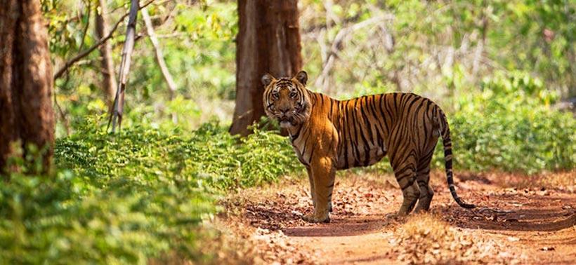 Wildlife Tour in Odisha